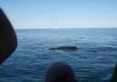 Cape Ann Whale Watch